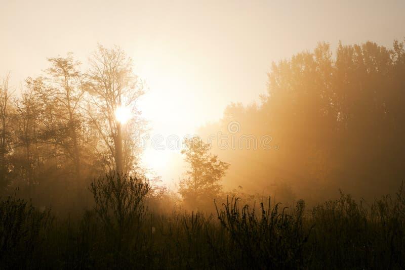 Восход солнца в туманнейшей пуще. стоковая фотография