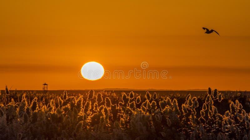 Восход солнца в Juyanhai стоковые фотографии rf