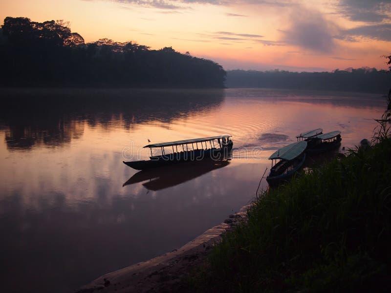 восход солнца дождевого леса Амазонкы стоковые изображения rf