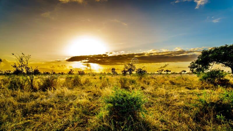 Восход солнца над полями саванны и травы в центральном национальном парке Kruger стоковые фотографии rf