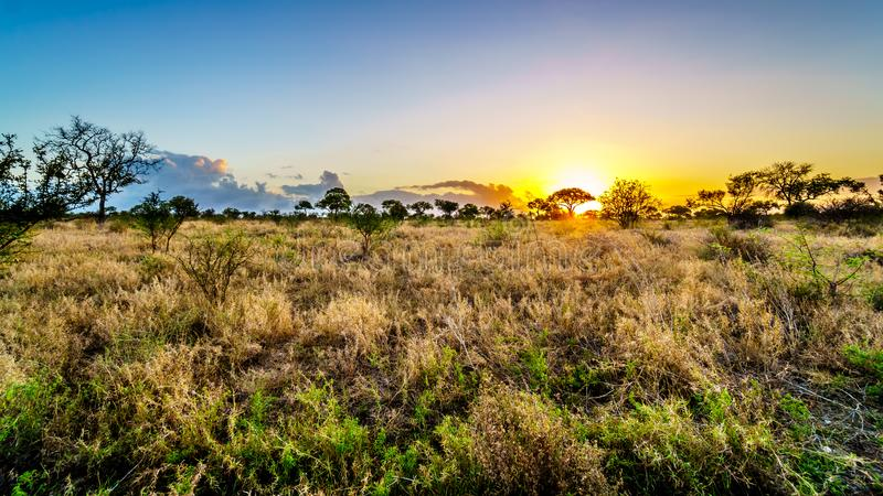 Восход солнца над полями саванны и травы в центральном национальном парке Kruger стоковые изображения