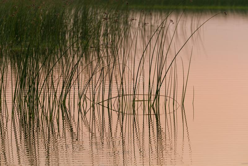 восход солнца на озере стоковая фотография