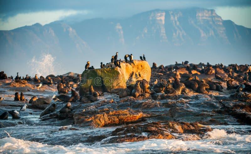 Восход солнца на острове уплотнения Ложный залив, западная накидка, Южная Африка, Африка стоковое фото