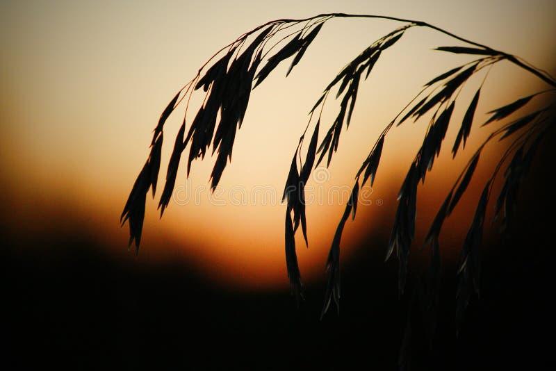 Восход солнца на поле стоковая фотография