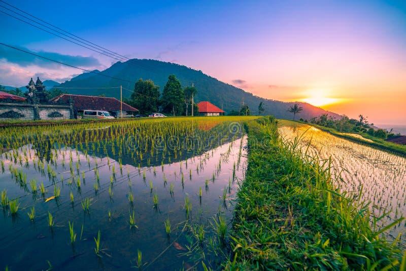 Восход солнца на полях риса на Tegallalang террасном Ubud, Бали, Индонезии стоковая фотография