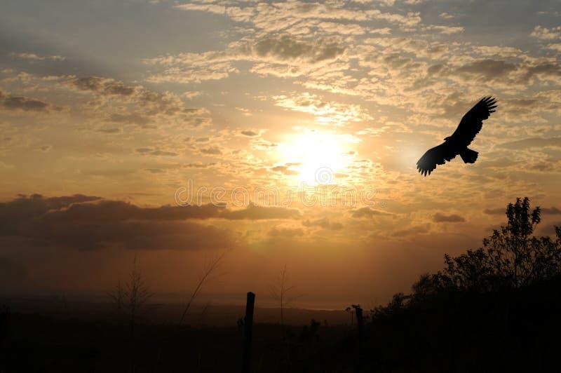 восход солнца орла стоковые фотографии rf