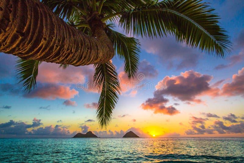 Восход солнца пляжа Lanikai стоковая фотография