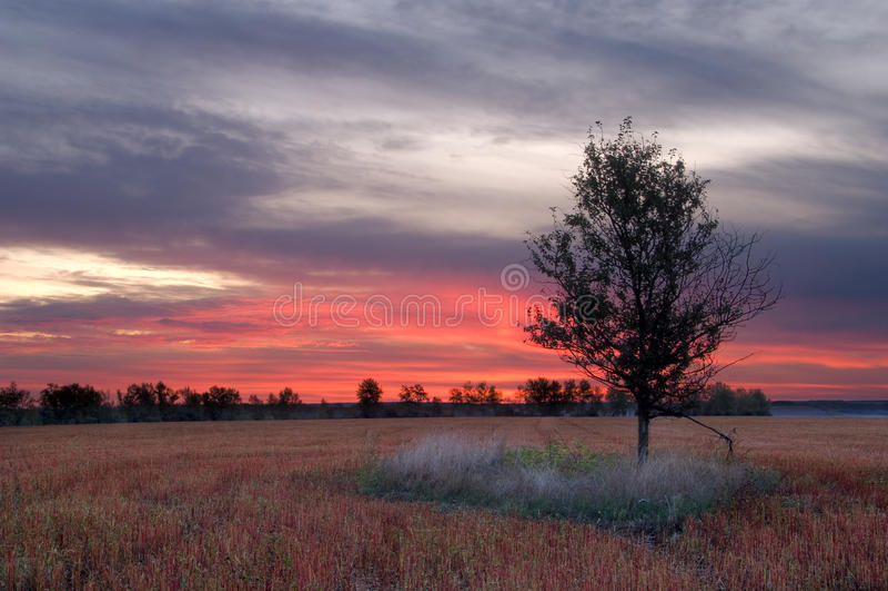 восход солнца поля гречихи стоковые фотографии rf