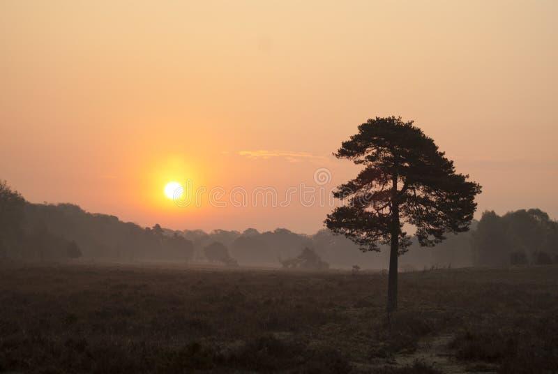восход солнца пущи новый стоковое фото