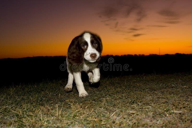 восход солнца Спрингера стоковая фотография