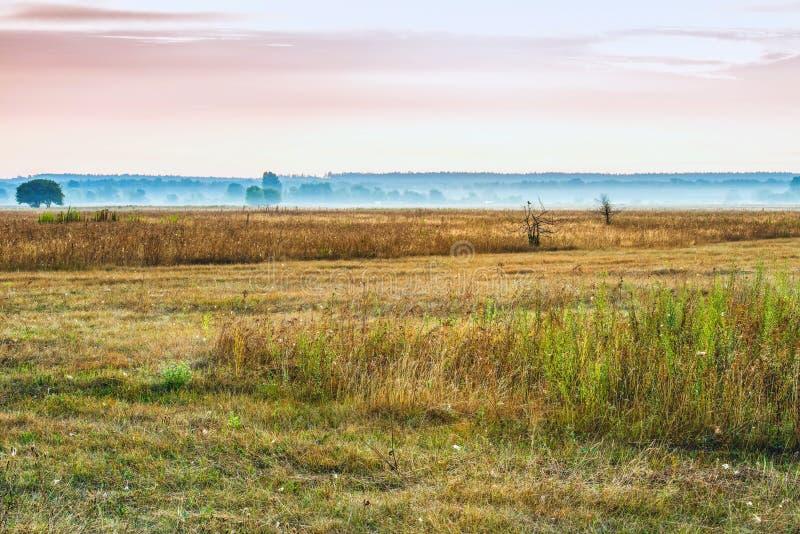 Восход солнца утра лета туманный над лугами стоковые изображения rf