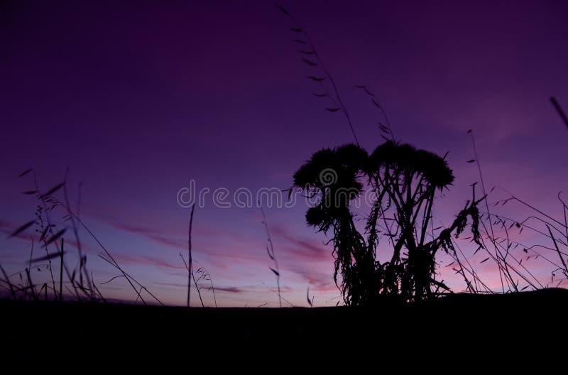 восход солнца фермы Стоковая Фотография
