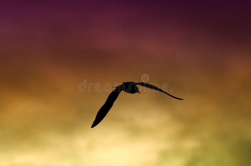 Download восход солнца чайки стоковое фото. изображение насчитывающей золотисто - 84864