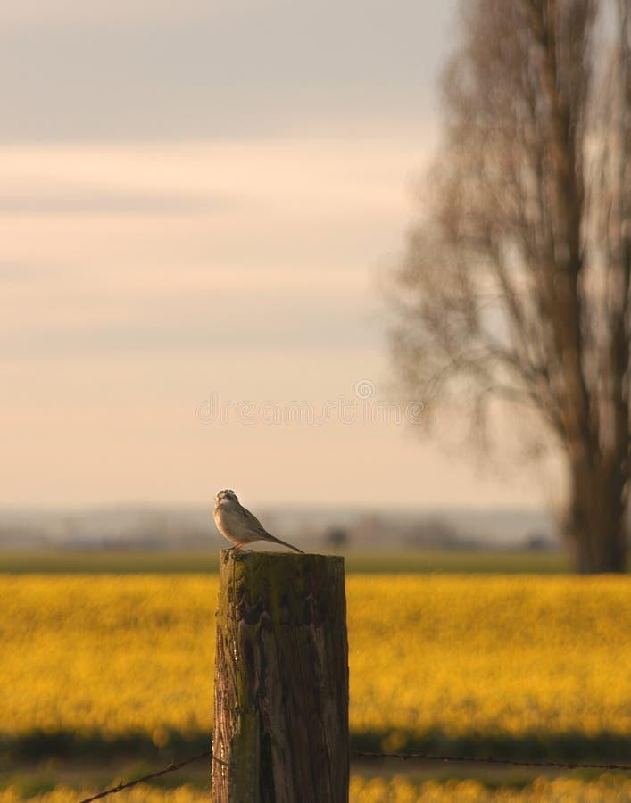 восход солнца Chickadee Стоковые Изображения
