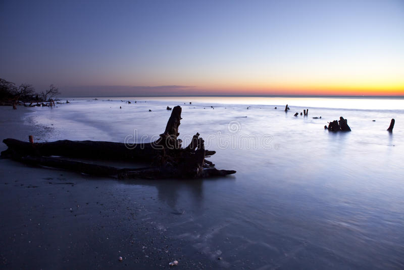 восход солнца driftwood стоковая фотография