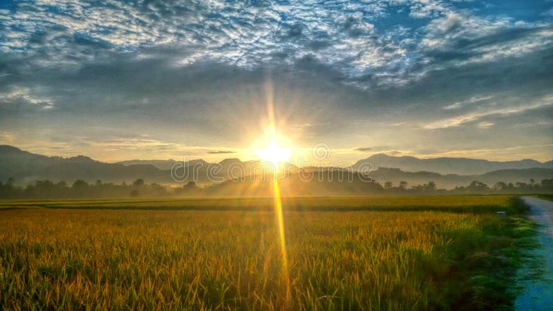 Восход солнца Paddyfield стоковая фотография