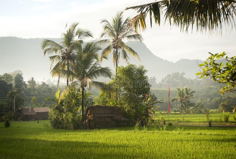 Восход солнца Бали в полях риса. стоковое изображение rf