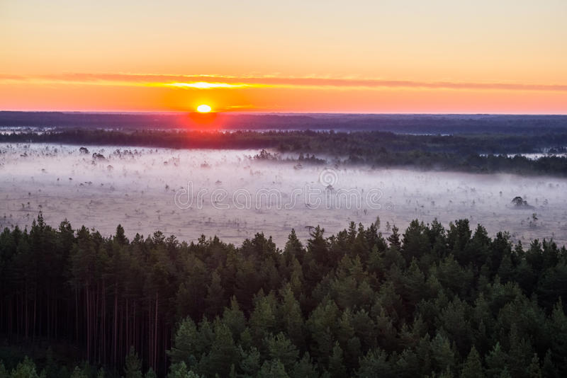 Восход солнца в болоте стоковые фотографии rf