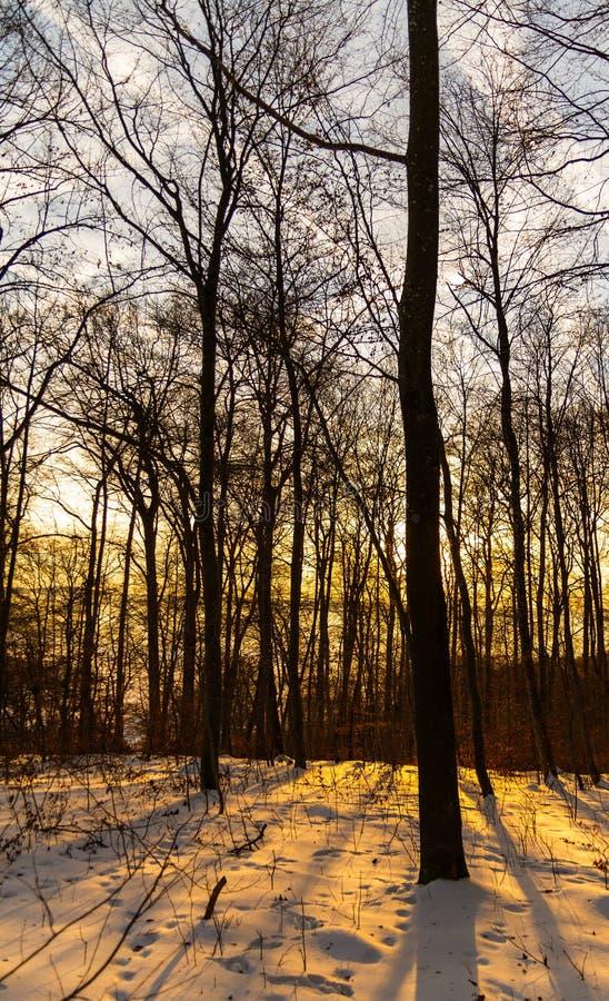 Восход солнца в лесе зимы стоковое изображение