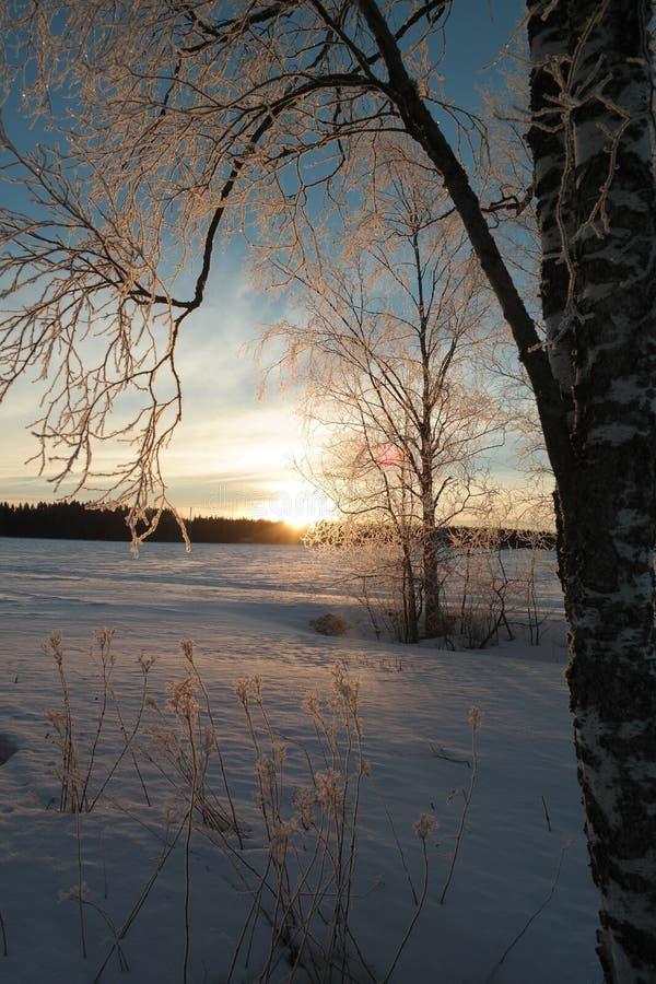Восход солнца в зиме стоковые фотографии rf