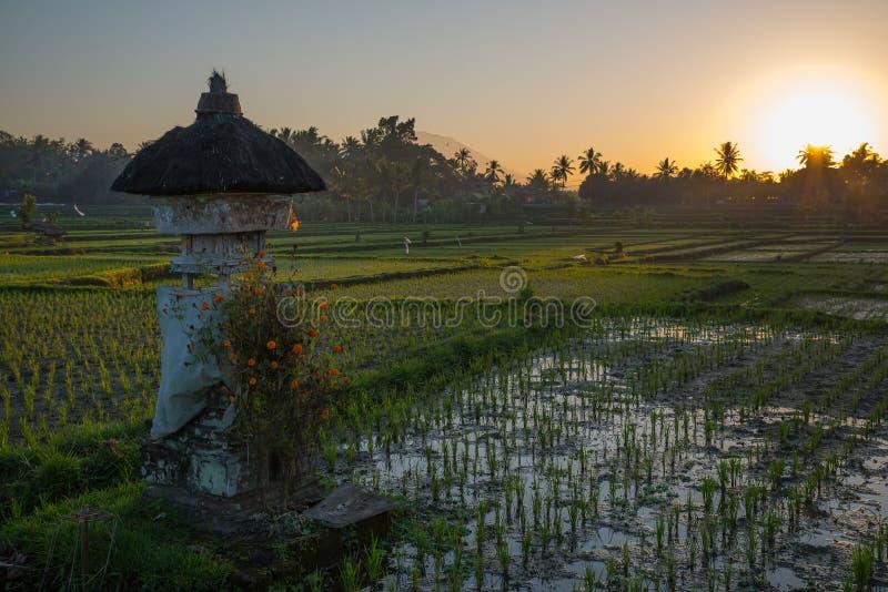 Восход солнца в рисе fields в Ubud, Бали стоковые фотографии rf