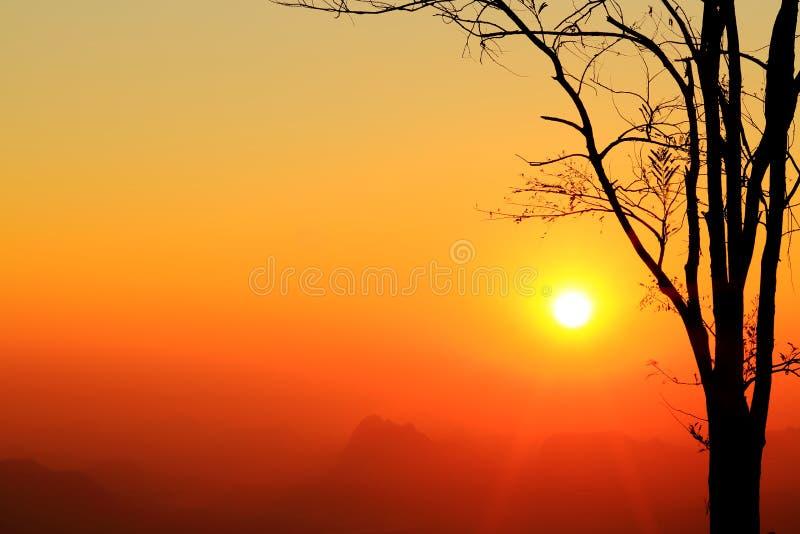 Восход солнца и дерево силуэта на красивом небе цветов стоковое фото