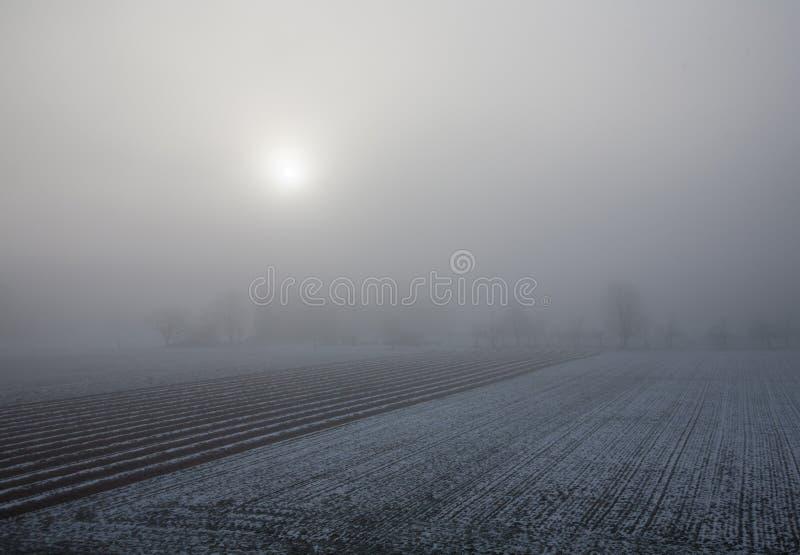 Восход солнца и туман на снежном поле фермы стоковое изображение rf