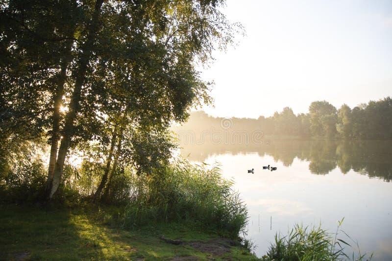 Восход солнца и birchtrees на озере стоковые изображения rf