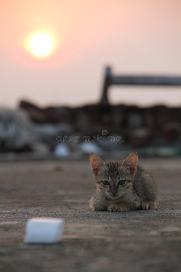 Восход солнца кота стоковые фотографии rf