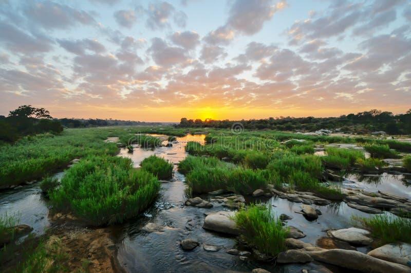 Восход солнца на национальном парке Kruger стоковое изображение rf