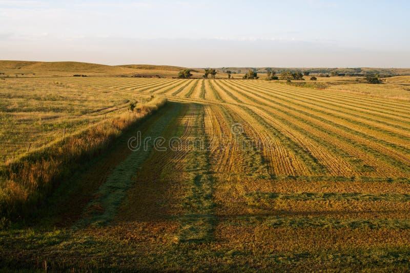 Восход солнца над полем сена стоковое фото