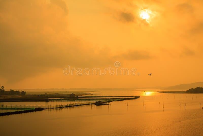 Восход солнца на пруде стоковая фотография