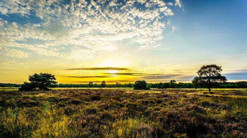 Восход солнца над Ermelose Heide с вересками вереска полностью зацветает стоковая фотография rf