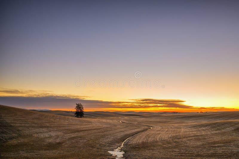 Восход солнца на Palouse стоковое фото rf