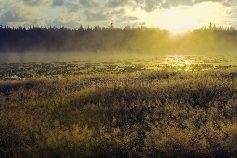 Восход солнца озера Fogy стоковое изображение