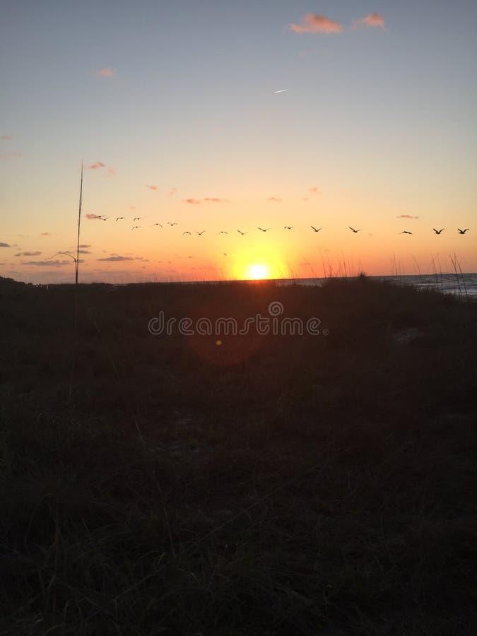 Восход солнца океана с птицами стоковые фотографии rf