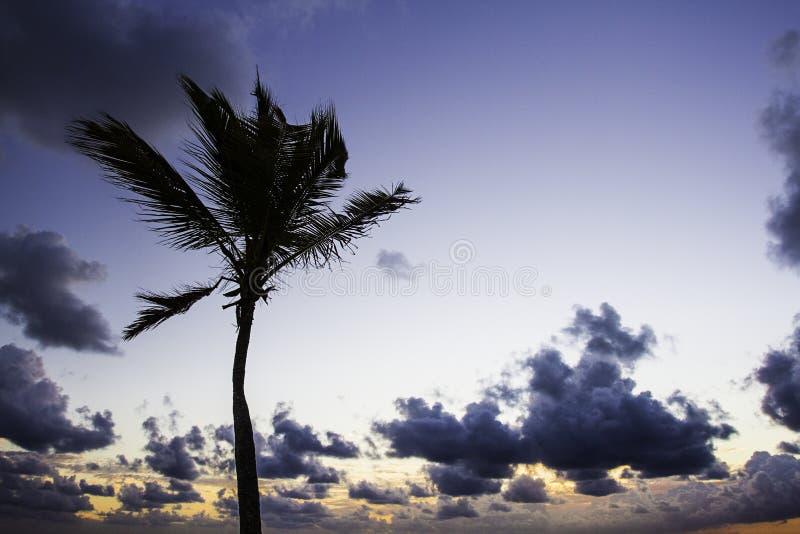 Восход солнца пальмы стоковое изображение