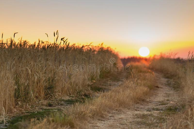 восход солнца России поля altai стоковое фото