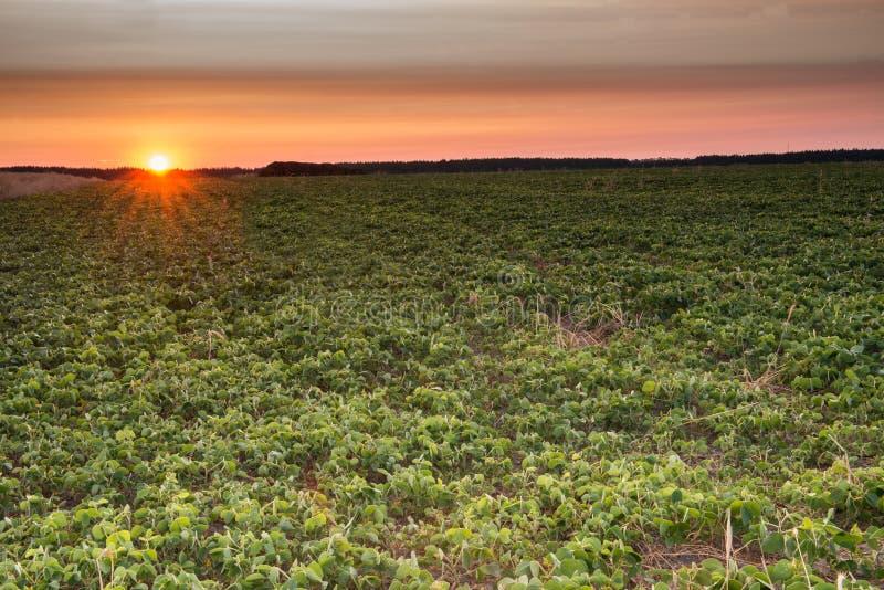 восход солнца России поля altai стоковая фотография rf