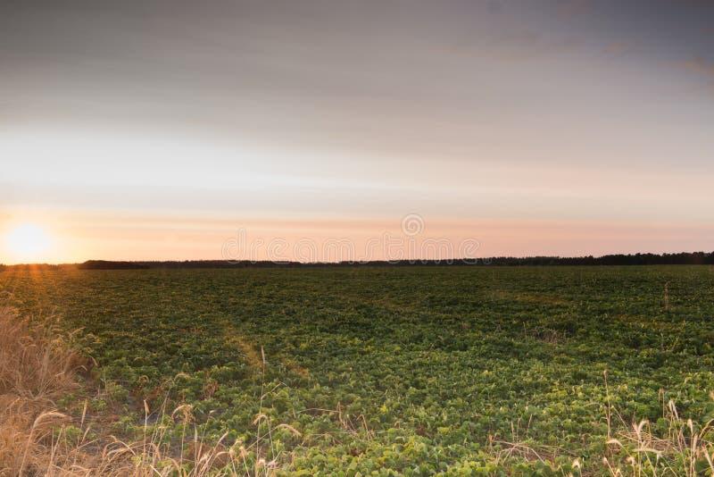 восход солнца России поля altai стоковое фото rf
