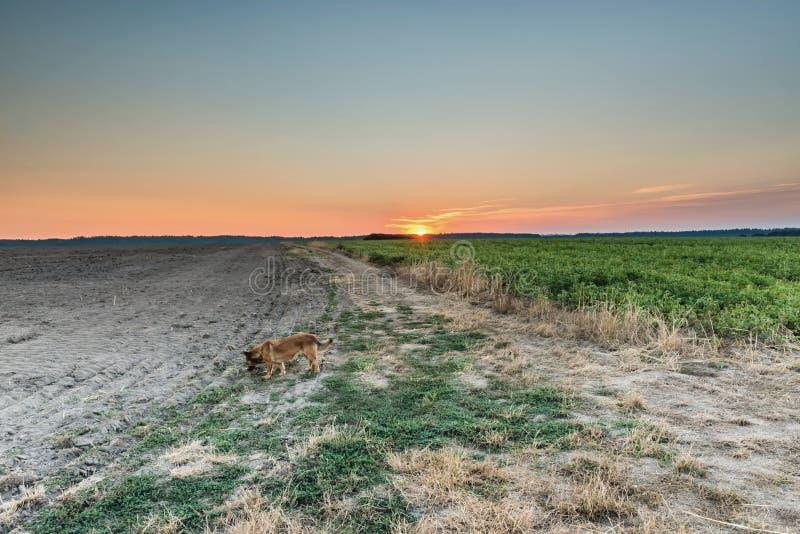 восход солнца России поля altai стоковая фотография