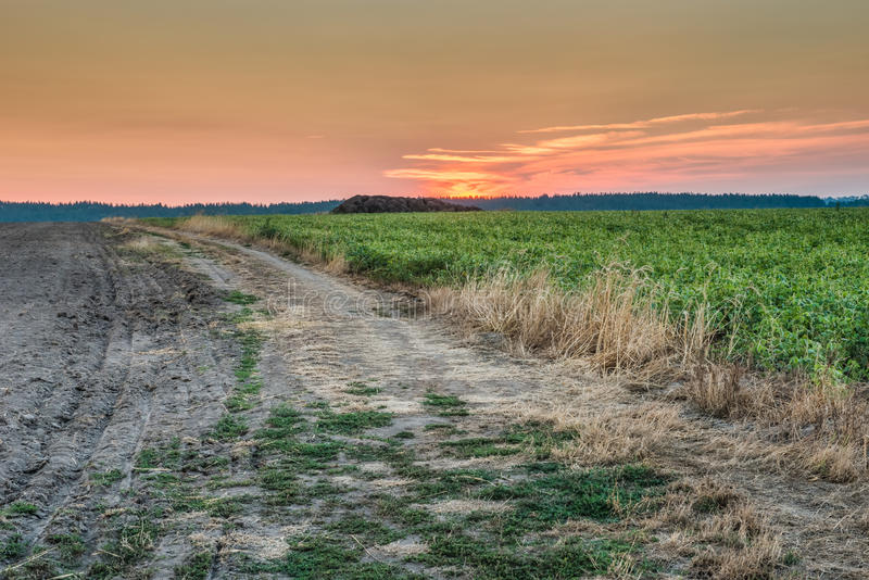 восход солнца России поля altai стоковые изображения rf