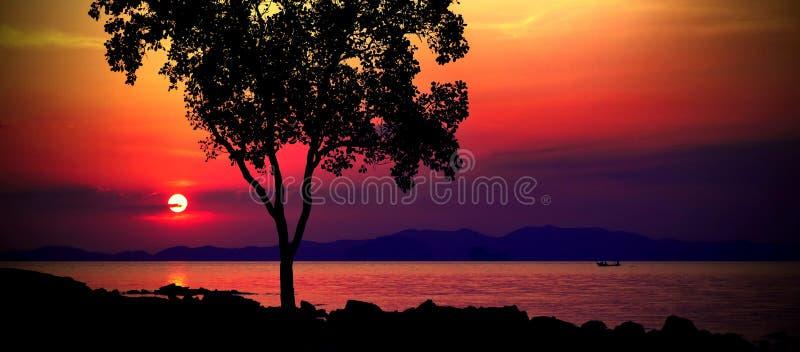 Восход солнца текила стоковые изображения