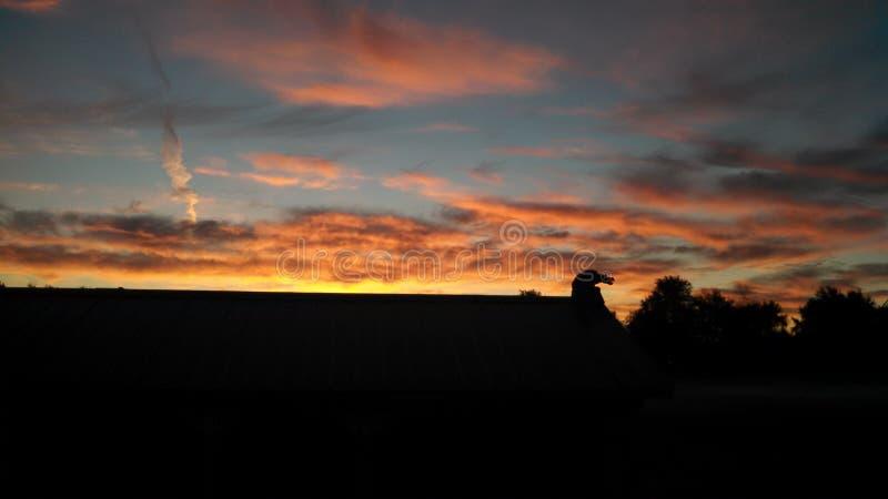 Восход солнца утра буйвола стоковое фото