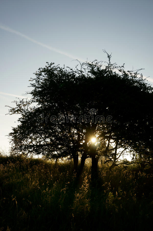 Download Восход солнца B дерева солнечного света Стоковое Фото - изображение насчитывающей вал, лучи: 41656584