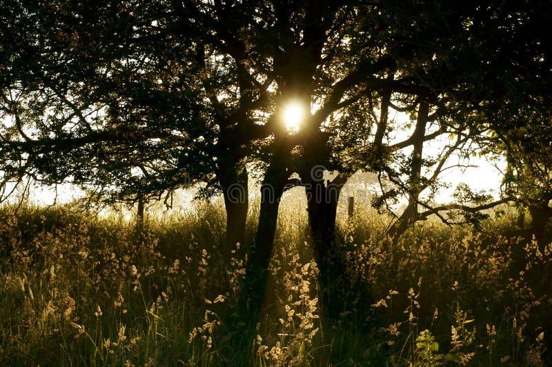 Download Восход солнца D дерева солнечного света Стоковое Фото - изображение насчитывающей brampton, сельско: 41656624