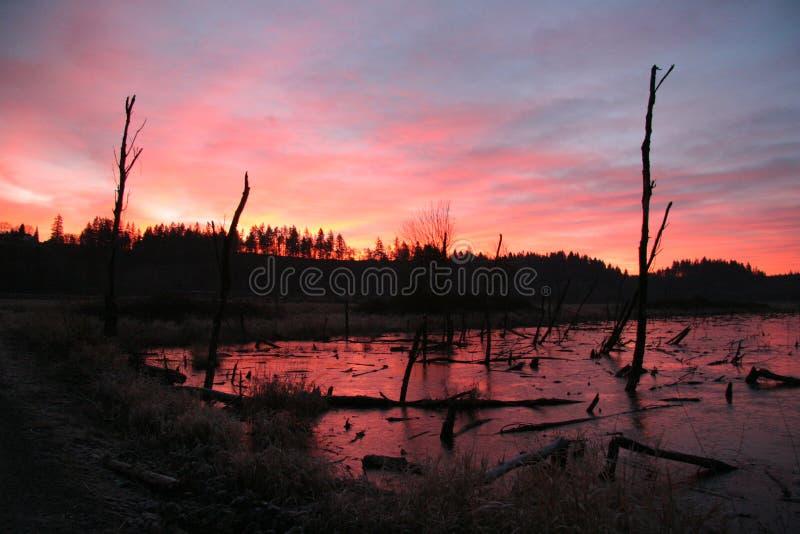 Восход солнца Ridgefield 2 стоковое фото rf