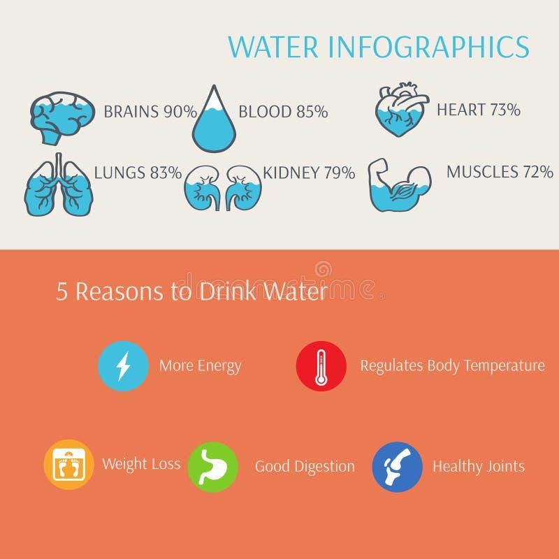 Вода в векторе Infographics человеческого тела бесплатная иллюстрация