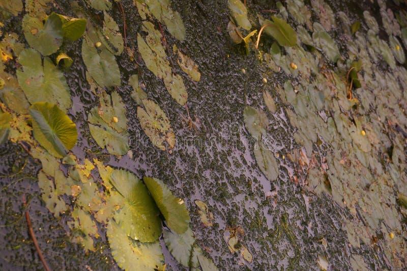 Вода и листья стоковая фотография rf