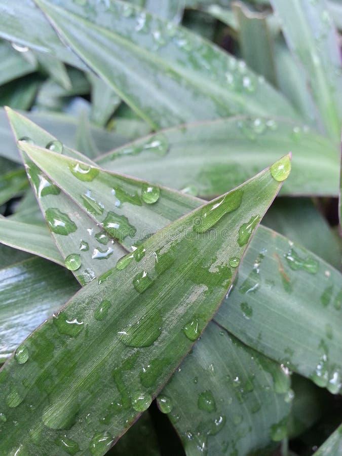 Вода на листьях стоковые изображения rf